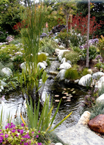 A true backyard paradise exists with the this large waterfall, stream and koi pond.
